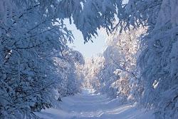 talvea kuvassa